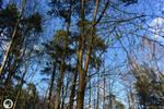 Svetene in the Forest by SuPARandomWolf