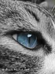 Hipnotic Blue