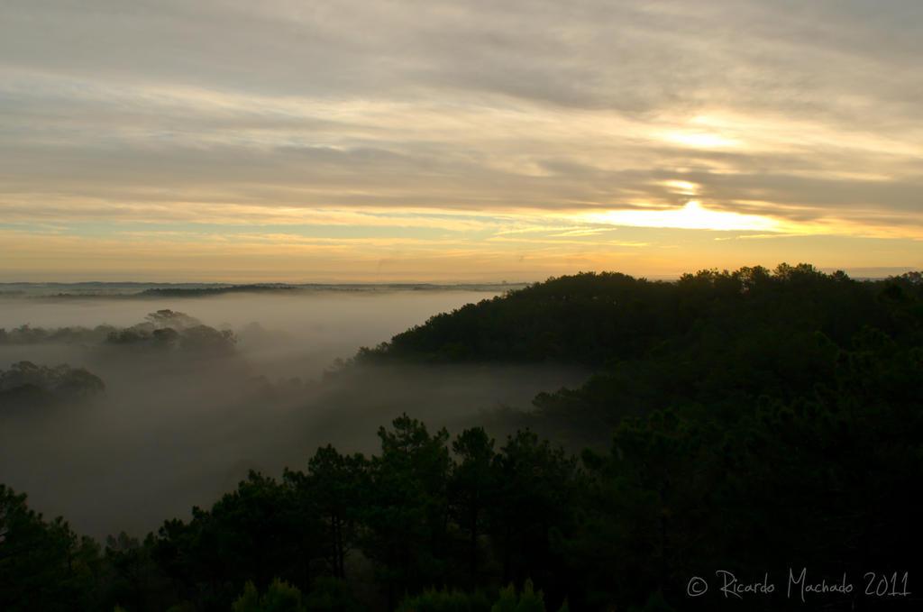 Neblina no Pinhal do Rei