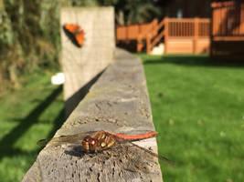 Bug Buddies by sgrahamUK