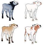 Pastel Calf adoptions by J4-Coltrain