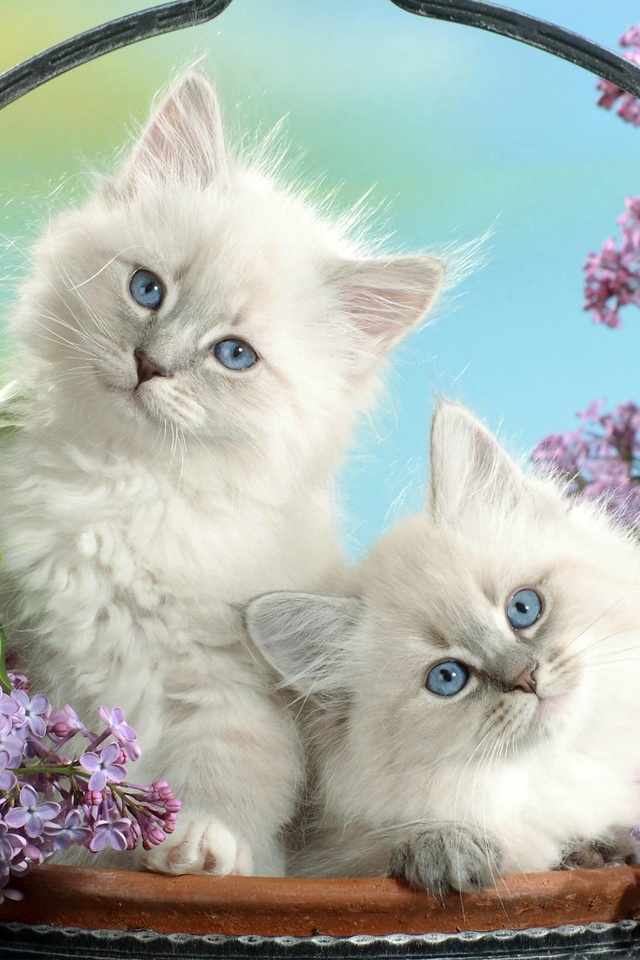 Cute Cats Iphone 4 Wallpapers By Adyovy On Deviantart