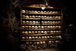 Skulls On The Shelves