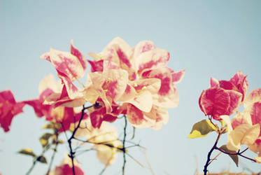 Luneta Blooms 1 by moraytafix