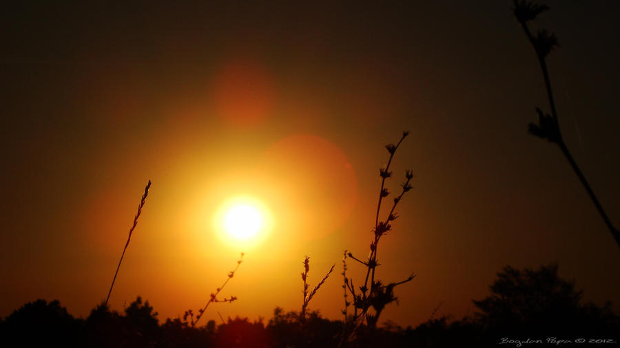Gold sunset! by bogdanpopa