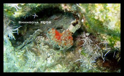 Frightened flower2 -underwater