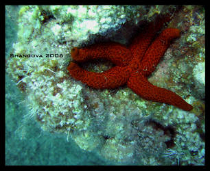 Seastar -2 -underwater by Shangova