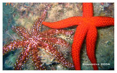 Seastar -5 -underwater
