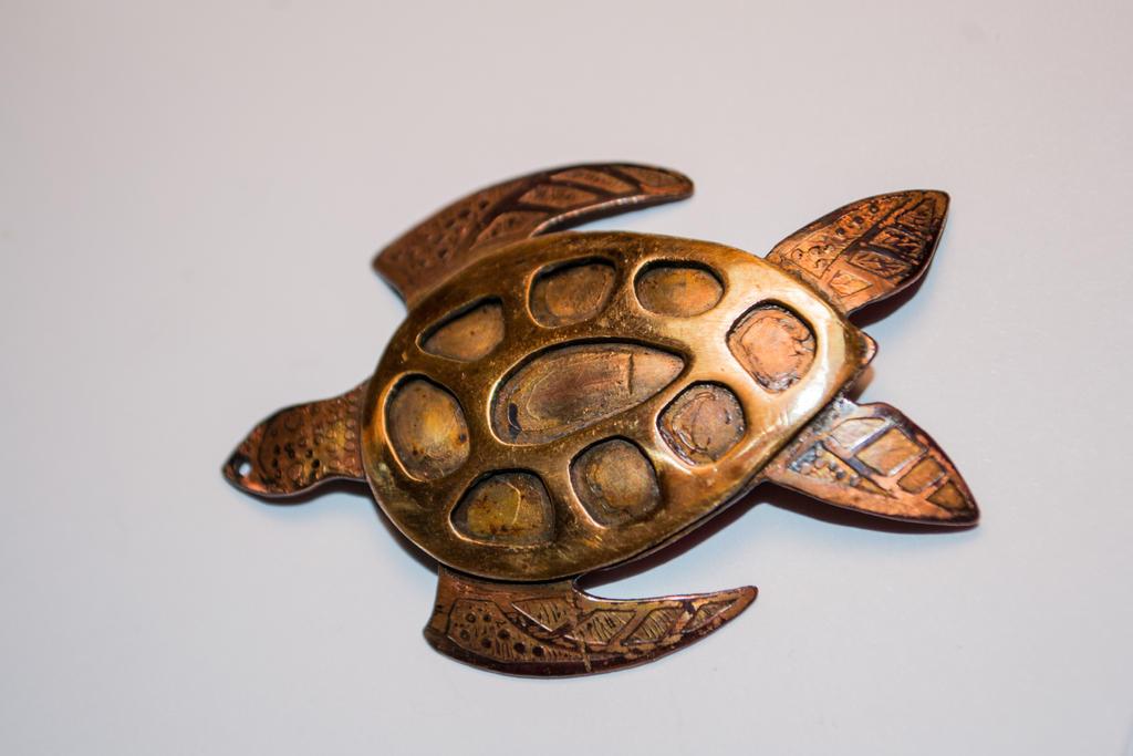 Turtle by Quetzalcoatls