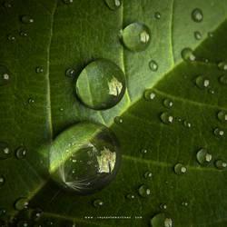 Tiny Worlds by reynante