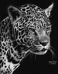 Leopard by marmicminipark