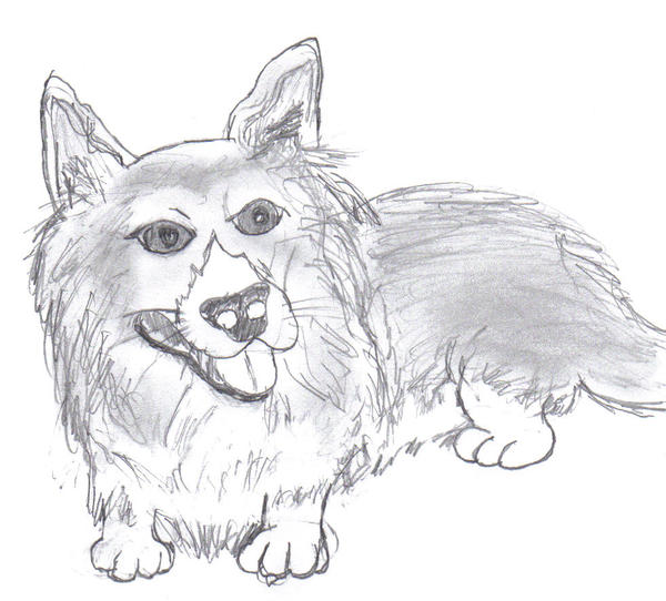 cardigan welsh corgi. Fluffy Cardigan Welsh Corgi by