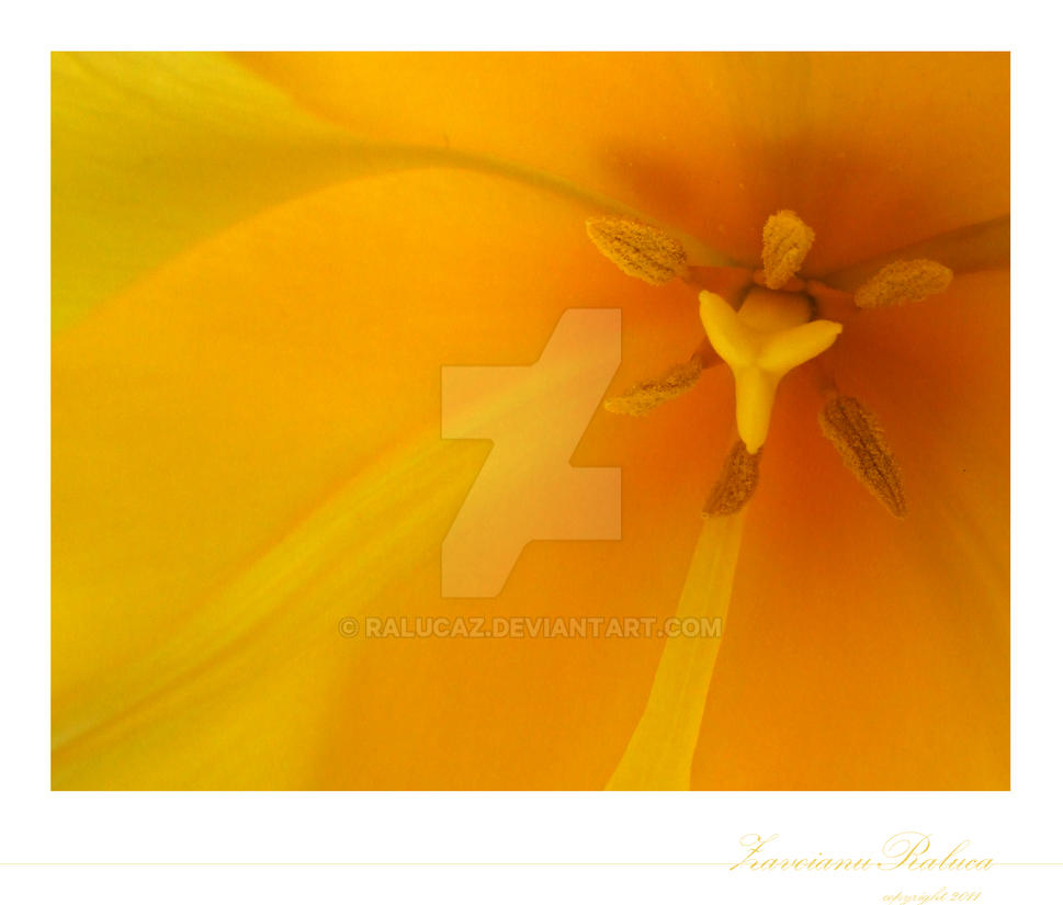 think in yellow by RalucaZ