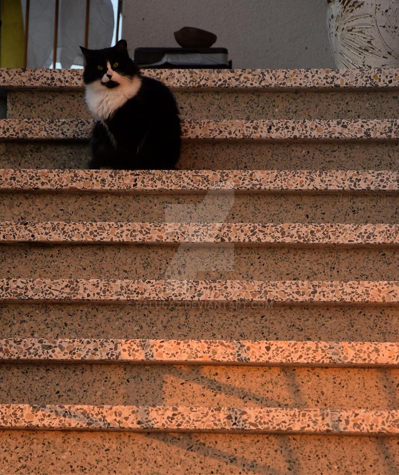 Il Gatto by RalucaZ