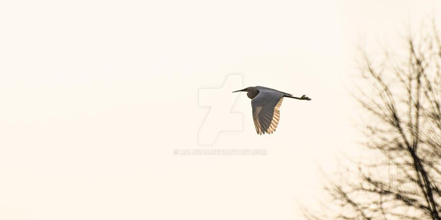 wings by RalucaZ