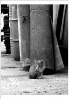 Homeless... by nenneko