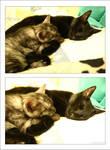 Sleeping Together no.1