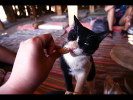 Cats of Egypt no.2 by nenneko