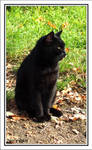 Stray Cat vol.2