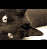 Those Eyes... by nenneko