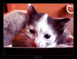 Natalia's Kitten 01 by nenneko