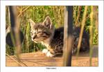 Wet Kitten 1