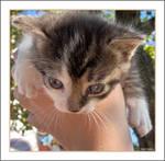 Maria's Kitten no.1