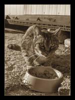 Cat Family no.2 by nenneko