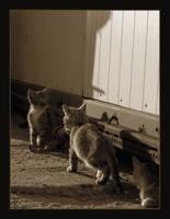 Cat Family no.3 by nenneko