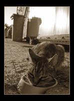 Cat Family no.5 by nenneko