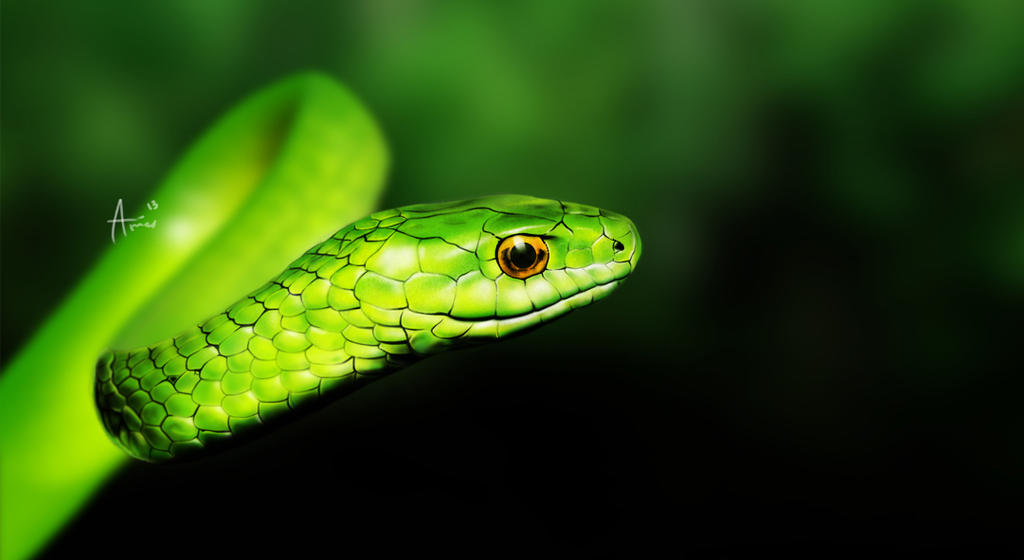 Image result for green tree snake photos