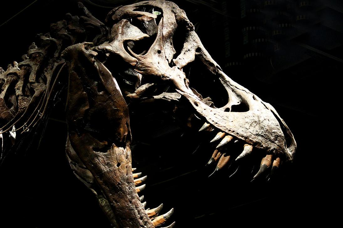 T-Rex by winterface