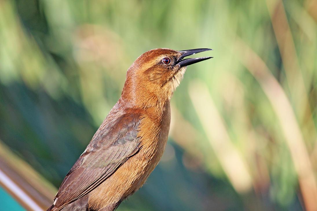 Open Beak by winterface
