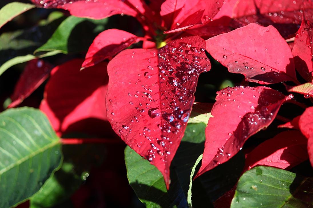 Dew by winterface