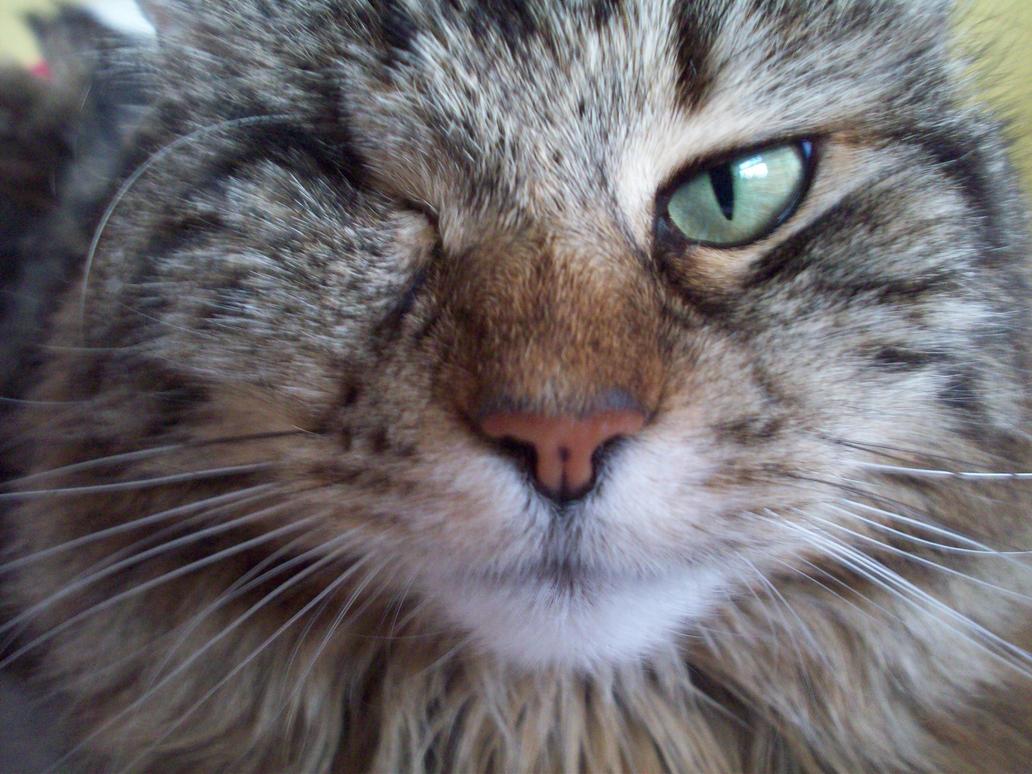 Saphie One Eyed Cat