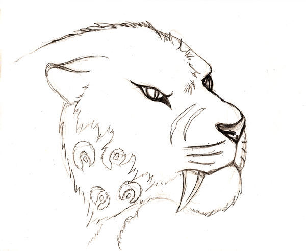 how to draw a saber tooth tiger step by step