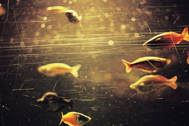 Fish. by galaxiesanddust