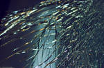 Broken Glass Texture 3.