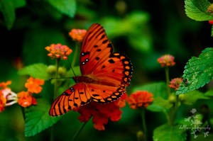 Vibrant Butterfly by Dollface-Photography