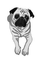 just a pug by creatreedesign