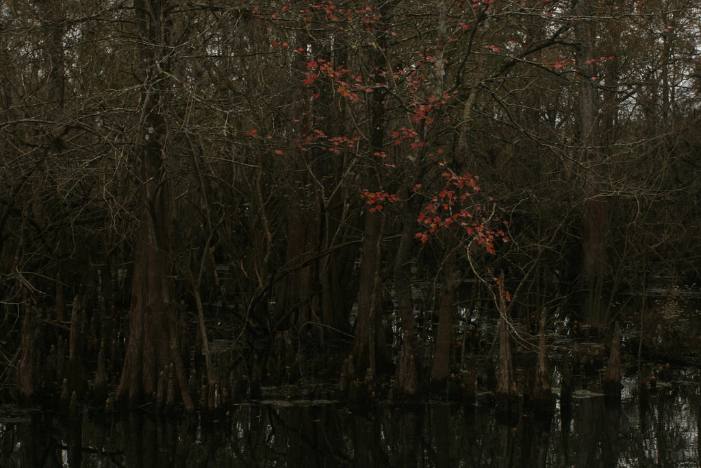 BAYOU RED by namelessneed