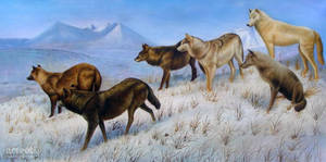 Mountain Wolves - Arteet