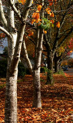 When Autumn Begins by Sharkbaitchick
