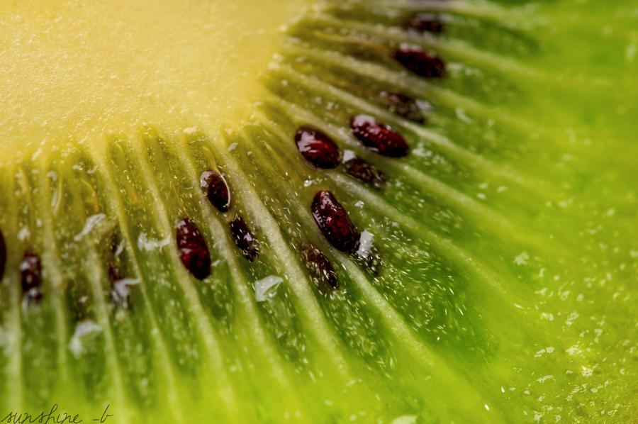 Kiwi I by sunshine-b