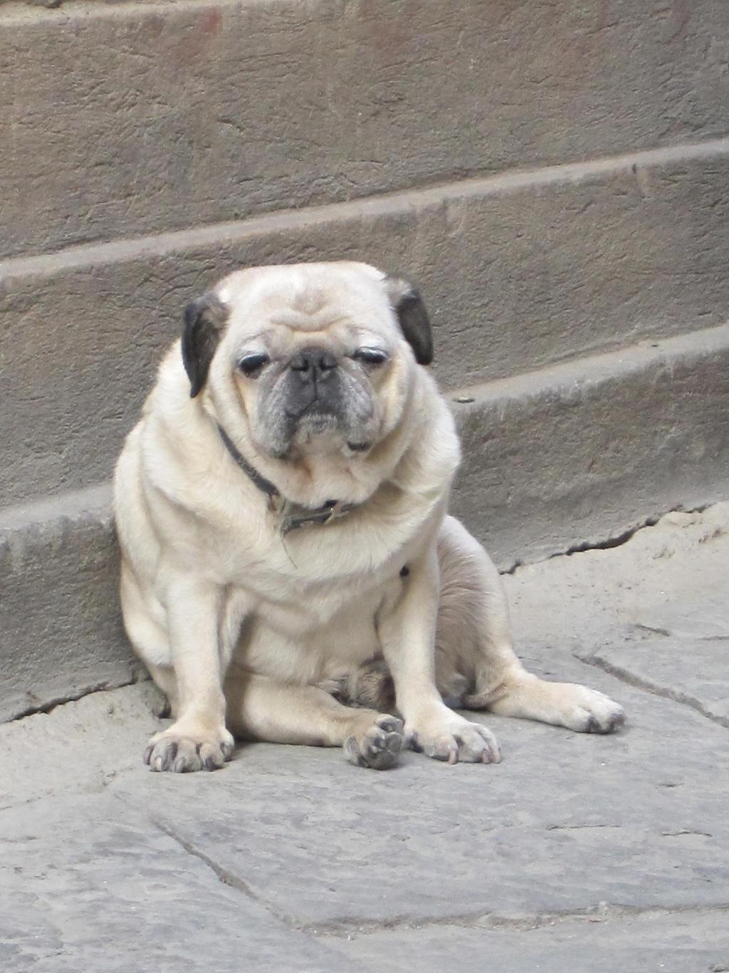 Grumpy dog by cyberfox007