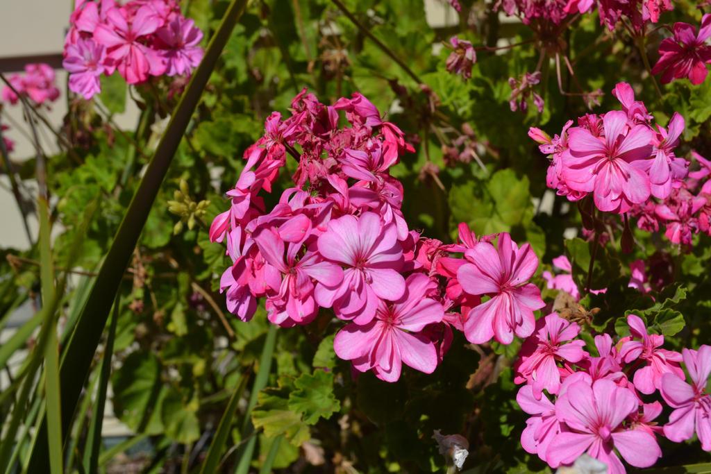 Pink Flowers by XanoarkTheZoroark
