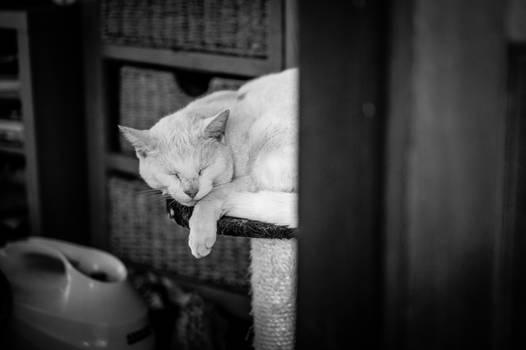 Yuki sleeping
