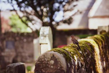 Graveyard burb
