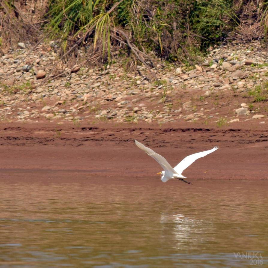 Flying by vaniuka
