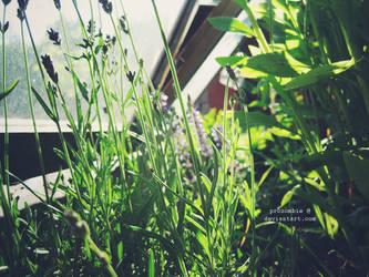 secret garden by ProZombie